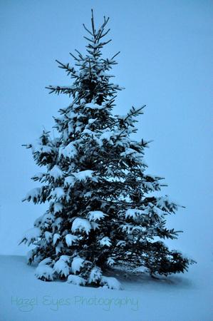 Winter.15