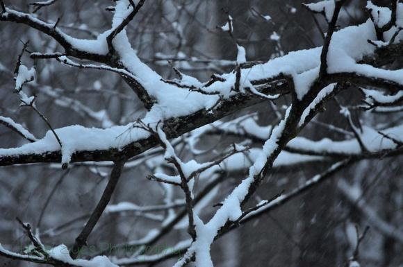 Winter.11